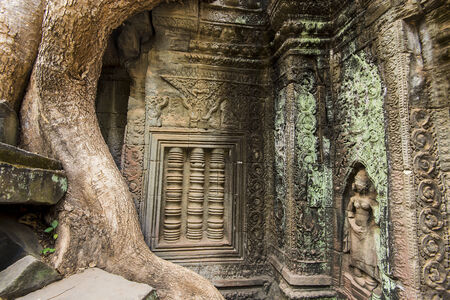 Beautiful carvings of Ta Prohm  Part of the Angkor Wat complex, Siem Reap, Cambodia