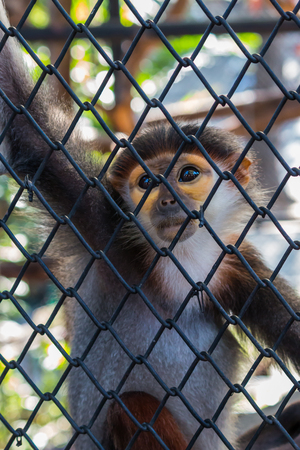 trapped: Little monkey trapped in a cage, a pity Stock Photo