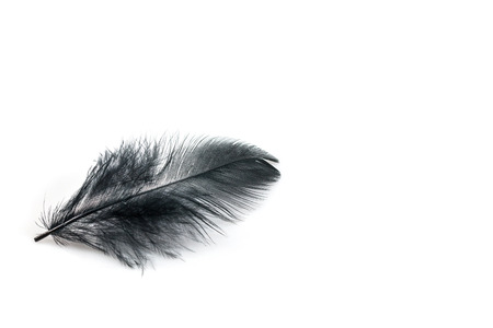 black feather: Black feather on a white background