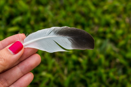 onto: Hand-picked feathers fall onto the lawn green.