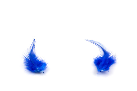 waft: Blue feathers on white background