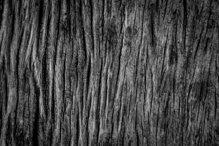 black wood texture: black wood texture Stock Photo