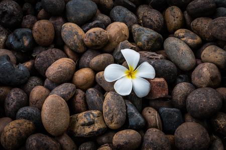 florae: Plumeria on rock ground