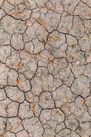 cracked earth: Dry cracked earth background