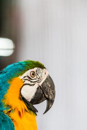 nucleo: Parrots core Foto de archivo