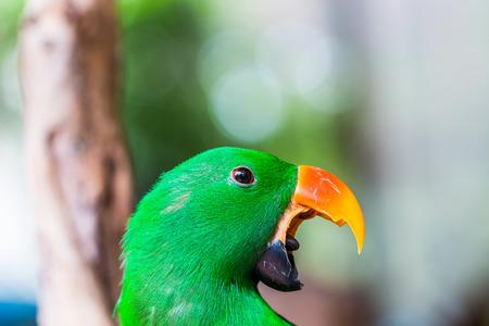 studio zoo: Beautiful Parrot Green