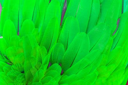 Cerca de plumas de guacamayo azul y verde loro pájaro patrón textura del fondo Foto de archivo