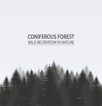 arbres silhouette: forêt de pins résineux. Camping