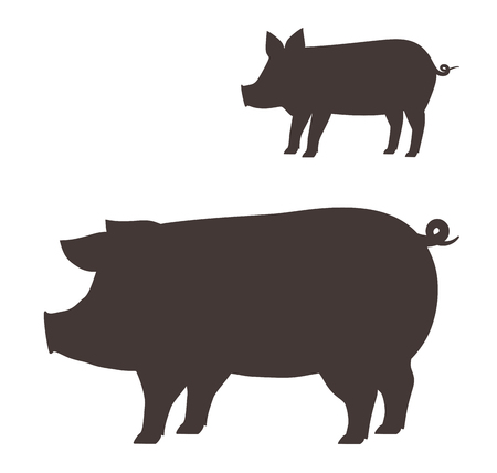 porcine: Big and little pig on white background.