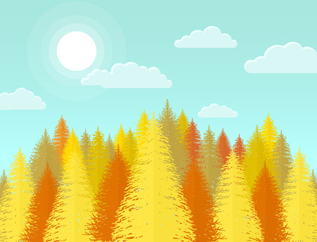yellow landscape: Autumn coniferous pine forest. Nature landscape with yellow trees and leaves.