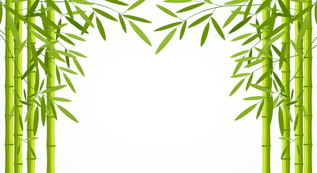 Green bamboo stems with leaves isolated on white background.