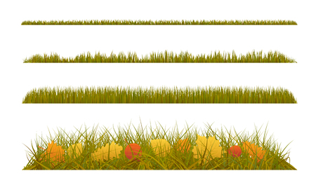 Autumn grass with fall leaves on white background. Set of autumn decorations.
