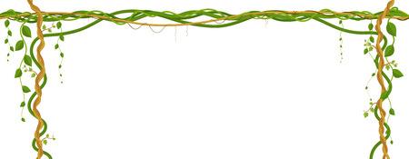 Pendaison de pampres. Jungle tropicale et plantes sur fond blanc.