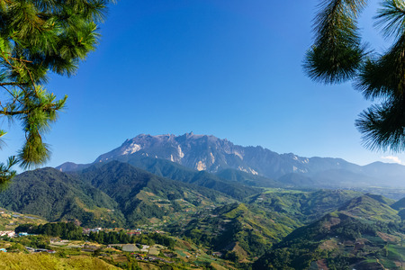 Mount Kinabalu naturally framed by leaves of pine tree at morning in Kundasang Sabah Malaysia