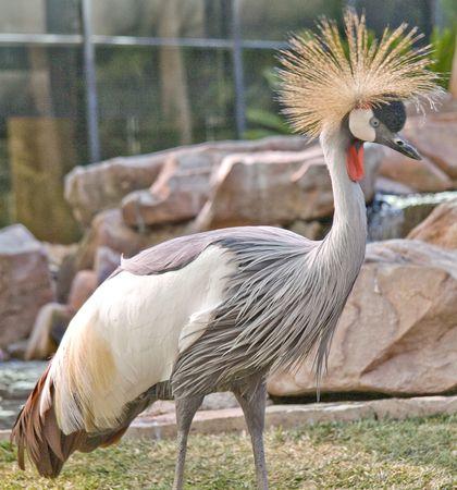 Bird of the Flamingo photo