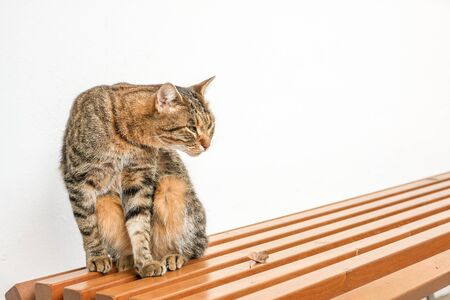 cat sitting on the bench near the wall