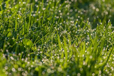 Drops of dew on a green grass.