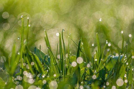 Dew on the grass in the morning.