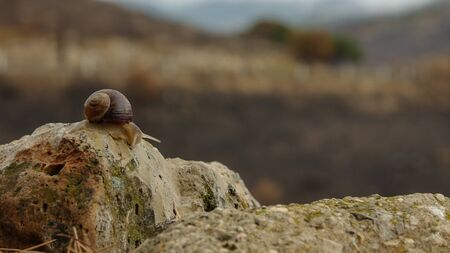 Snail on the post beside road, The concept of fast to slow