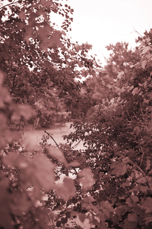 50mm: liefs Stock Photo