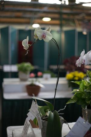 aspect: flowers, decoration, plants,   close up , macro, aspect, partial, background