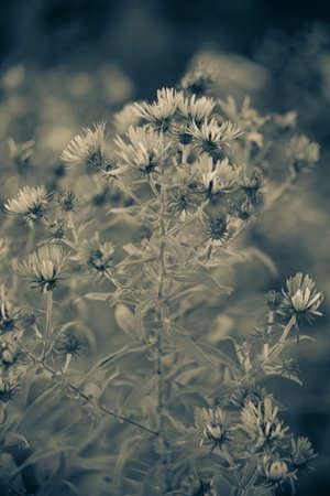 plant flowers Banco de Imagens