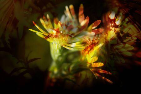 flower macro Banco de Imagens