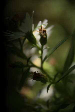 flower macro Reklamní fotografie
