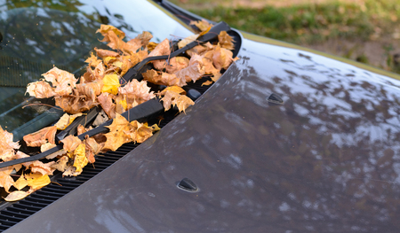 Fallen yellow leaves on the glass and the hood of the car in the autumn