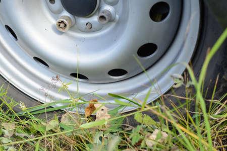 tyre tread: Wheel car among green grass and yellow foliage