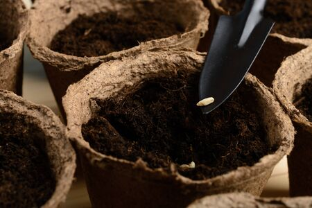 turba: Seeds on a shovel over a peat pot Foto de archivo