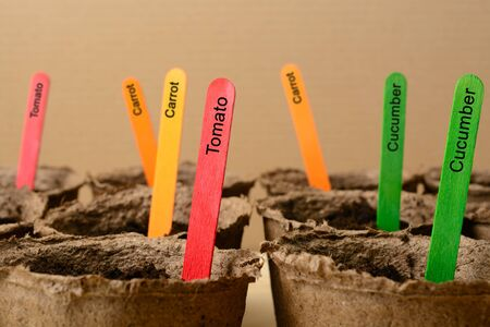 turba: Multicolored sticks in peat pots with soil