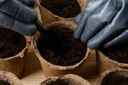 turba: Manos femeninas en los guantes de la plantación de semillas en una maceta de turba Foto de archivo