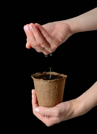 turba: Womens hands are holding a peat pot with seedlings and watered on black background