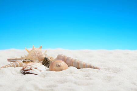 Mollusk shells on the white sand beach