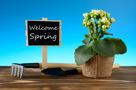 Potted flower and Welcome spring sign on wooden table