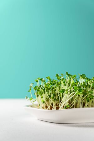 Micro greens arugula sprouts in a white plate on a turquoise background. Vertical orientation with copy space. Organic food and proper nutrition concept. Reklamní fotografie