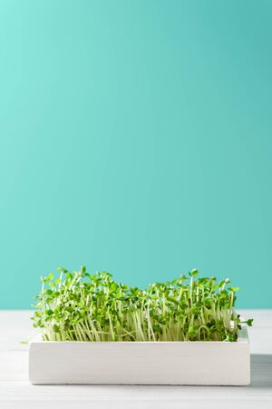 Micro greens arugula sprouts in a white wooden box on a turquoise background. Vertical orientation, copy space. Organic food and proper nutrition concept. Reklamní fotografie