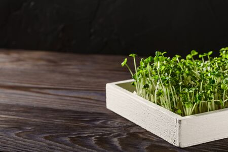 Fresh micro greens in a white wooden box on a dark brown background. Image with copy space, horizontal orientation. Reklamní fotografie