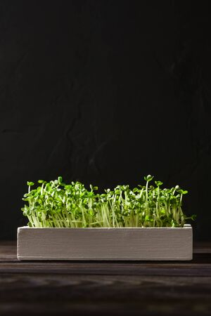 Fresh micro greens in a white wooden box on a dark brown background. Image with copy space, vertical orientation.