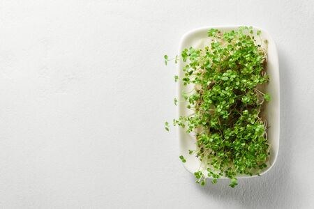Fresh micro greens arugula sprouts grow in a plate on a light concrete background. Top view, copy space. The concept of organic food and proper nutrition.