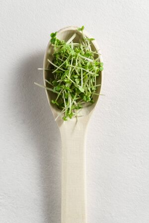 Fresh micro greens arugula sprouts in a wooden spoon on a light gray concrete background. Top view, copy space. The concept of organic food and proper nutrition. Reklamní fotografie