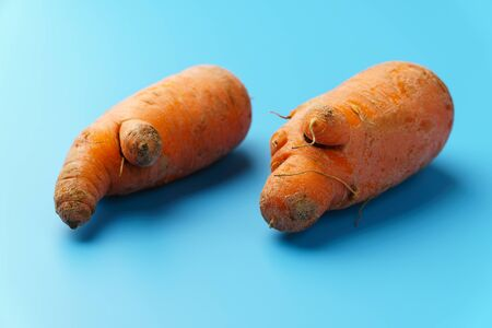Two ugly carrots on a blue background. Zero food waste concept.