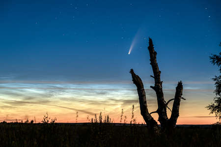 Silhouette of an old tree against the background of Noctilucent Clouds and Comet C/2020 F3 Neowise in the night sky. Banco de Imagens