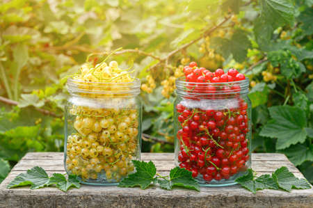 Red and white currants in glass jars. Eco food concept. Summer sunny day.