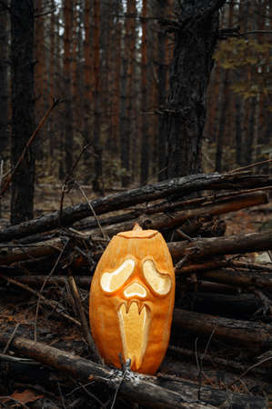 Creepy glowing Jack O Lantern pumpkin in the autumn forest at dusk. Halloween holiday background. Vertical orientation, copy space. Imagens