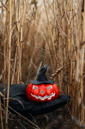 Halloween background. Human hand in black glove holding a scary Halloween pumpkin with a witch hat in a wheat field. Daytime. Vertical orientation, copyspace.