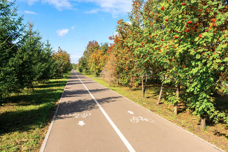 Beautiful sunny summer day. Two-way asphalt bike path in the urban park in perspective, no people. Banco de Imagens