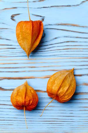 Physalis or Chinese Lantern close-up. Natural seasonal autumn decorations.