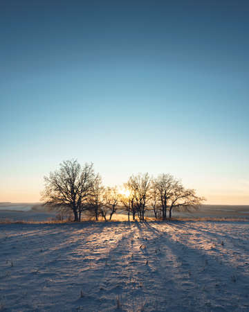 Winter landscape silhouettes trees in hoarfrost on sunset background